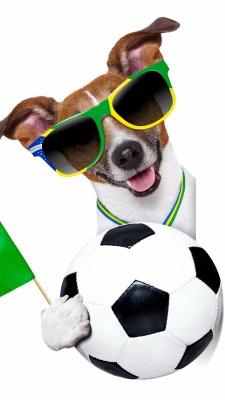 توپ-توپ فوتبال-سگ