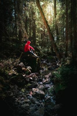 تنهایی-جنگل