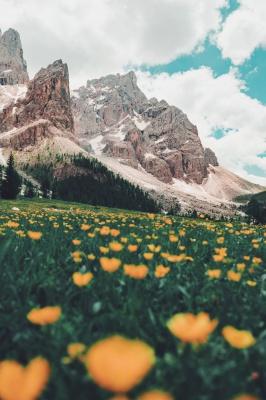 گلستان-زرد-کوهستان-بیشه-مرتع-منظره
