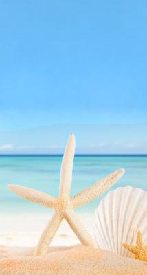 ستاره دریایی-ساحل-صدف