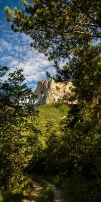 جنگل-صخره