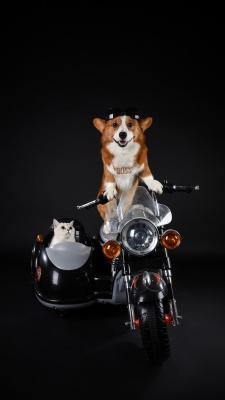 مشکی-سیاه-سگ-گربه-موتور سواری-موتور