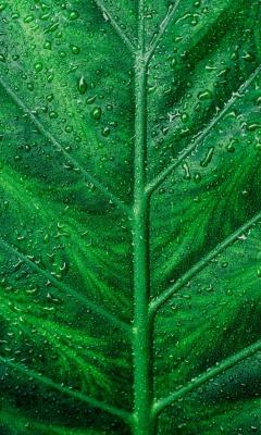 سبز-گیاه-برگ