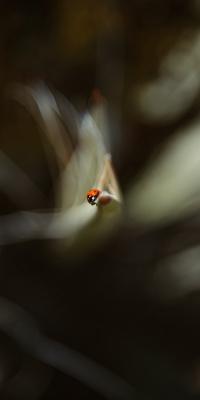 کفش دوزک-حشرات