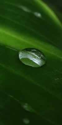 شبنم-سبز