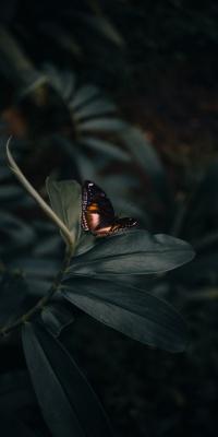 پروانه-حشره-حشرات