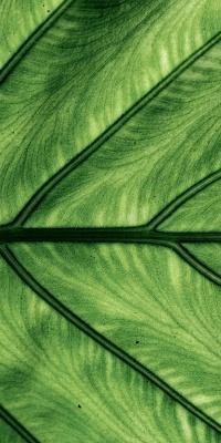 سبز-برگ