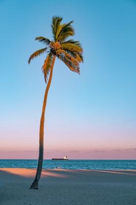نخل-درخت نخل-ساحل