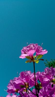 بنفش-فیروزه ای-آبی