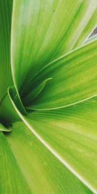سبز-سبزه