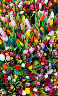 رنگی-گل لاله