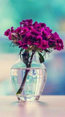 بنفش-گلدان