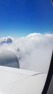 بال هواپیما