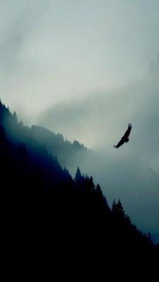پرنده-جنگل-مه