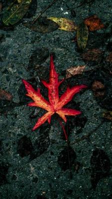 برگ-پاییز