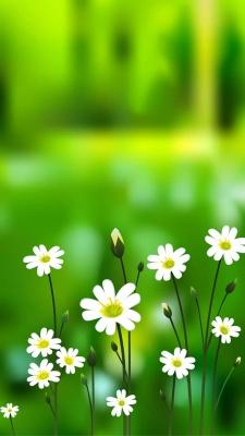 گل-سفید-سبز