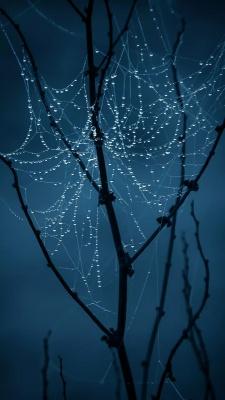 درخت-تار عنکبوت