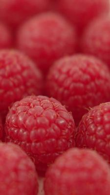شاتوت-توت-توت قرمز-قرمز-میوه