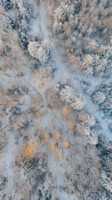 جنگل-زمستان-ویو