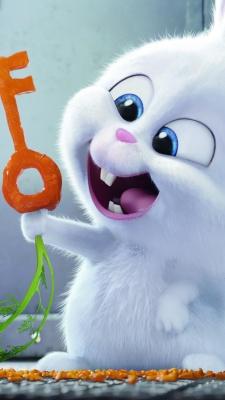 زندگی مخفی حیوانات-خرگوش