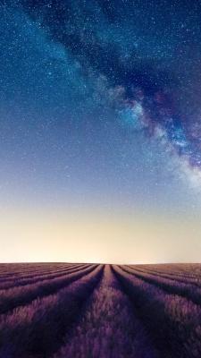 گلستان-ستارگان-بنفش-آسمان-آبی