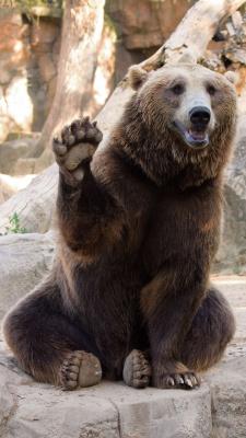 خرس-خداحافظی-بای بای-قهوه ای