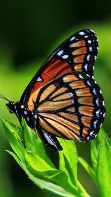 پروانه-حشرات-شاپرک-سبز
