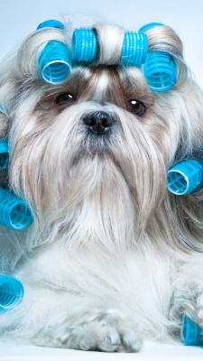 سگ-آبی
