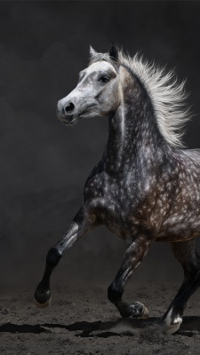 خاکستری-اسب