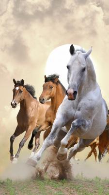 اسب-اسب دوانی
