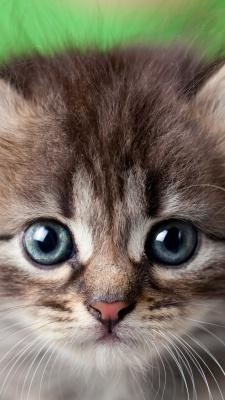 گربه-ترس-پیشی