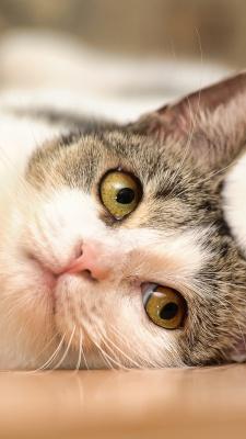 گربه-پیشی-خسته-تنبل-تنبلی