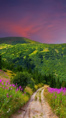 منظره-سبز-جنگل-مرتع-بیشه-سرسبز