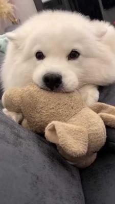 سگ-حیوان