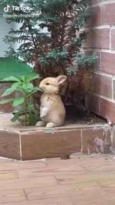 حیوان-خرگوش