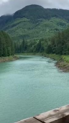رودخانه-جنگل