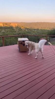 حیوان-بازی-سگ