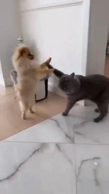 حیوان-سگ-گربه