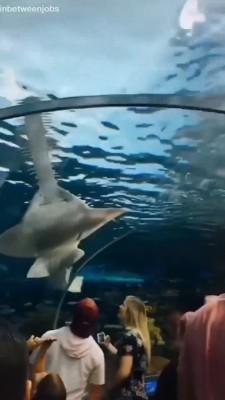 حیوان-اره ماهی-تونل آکواریوم-دریا